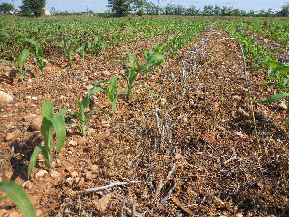Pôdy obrábané s pásovou technológiou-9