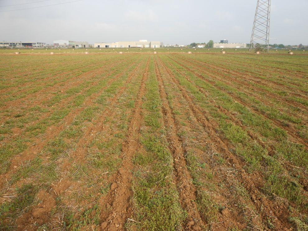 Pôdy obrábané s pásovou technológiou-1