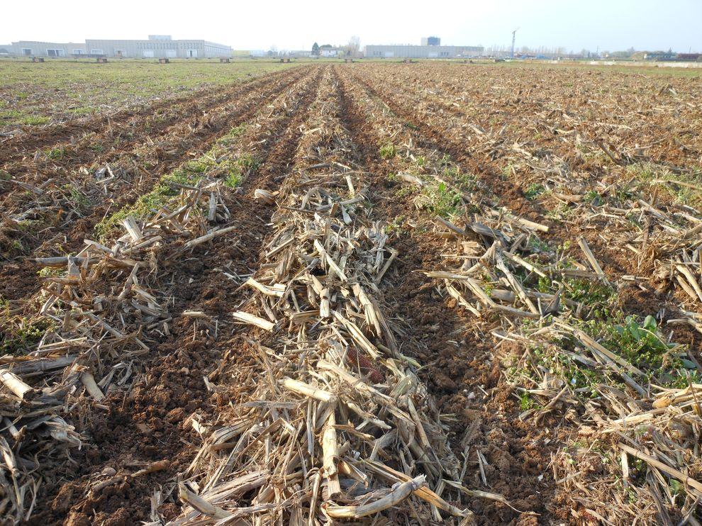 Pôdy obrábané s pásovou technológiou-2
