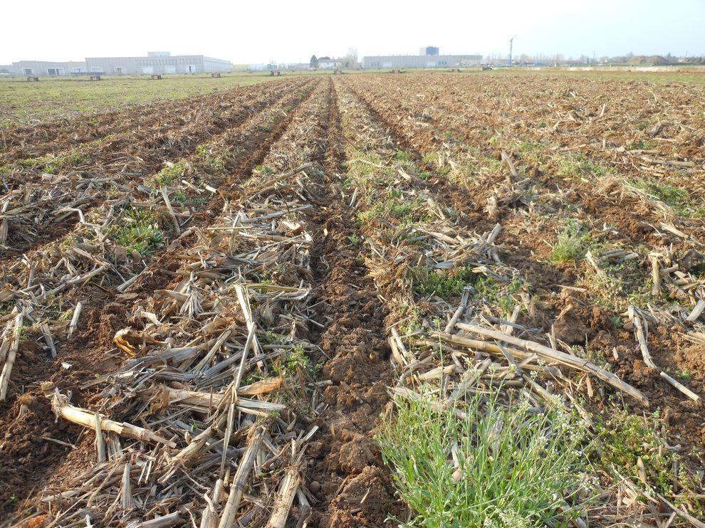 Pôdy obrábané s pásovou technológiou-0