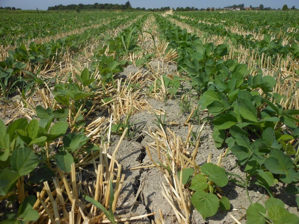 Pôdy obrábané s pásovou technológiou-10